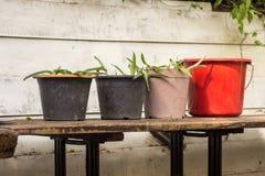 Jardiniere Fotografia Stock