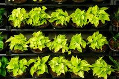 Jardiniere klingeryt dla drzewnego flancowania w ogródzie fotografia stock