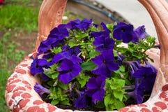 Jardiniere - med purperpetunior Royaltyfria Bilder
