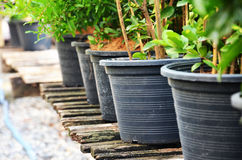 Jardiniere. Potted plants arranged on old wooden floor Royalty Free Stock Photos
