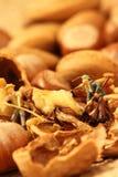 Jardiniers miniatures nuts Photographie stock