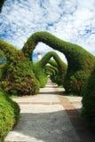 Le genévrier sculpté arque le jardin Images libres de droits