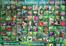 Jardins Barbade du ` s de Hunte photos stock