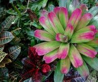 Jardins Barbade du ` s de Hunte photographie stock libre de droits