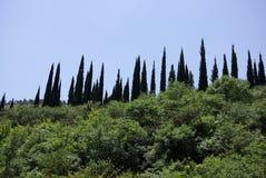 Jardins botânicos 3 Imagens de Stock