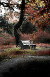 Jardins botânicos Fotografia de Stock Royalty Free