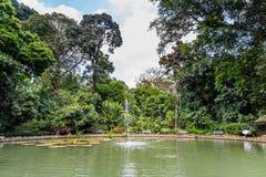 Jardins botânicos Bogor, Java ocidental, Indonésia Imagem de Stock Royalty Free