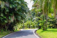 Jardins botânicos Bogor, Java ocidental, Indonésia imagens de stock