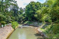 Jardins botânicos Bogor, Java ocidental, Indonésia Foto de Stock