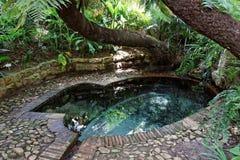 Jardins botânicos Cape Town fotos de stock royalty free
