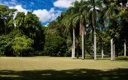 Jardins botânicos de Brisbane Foto de Stock