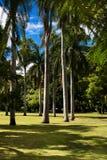 Jardins botânicos de Brisbane Fotos de Stock