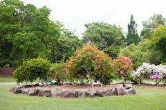 Jardins botânicos de Singapura Fotografia de Stock Royalty Free