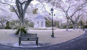 Jardins botânicos de Singapura da cena infravermelha do princípio da tarde Imagens de Stock