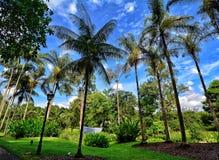 Jardins botânicos de Singapura, Marina Bay, Singapura Imagens de Stock Royalty Free