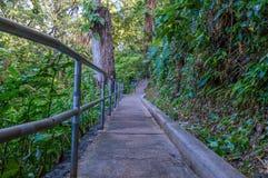 Jardins botânicos de trajeto de passeio imagens de stock