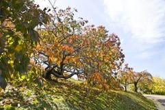 Jardins botânicos elevados da montagem, Sul da Austrália Foto de Stock Royalty Free