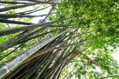 Jardins botânicos reais. foto de stock royalty free