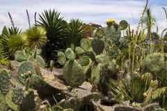 Jardins botaniques d'Auckland Photo libre de droits