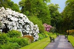 Jardins botaniques de Belfast Photos stock