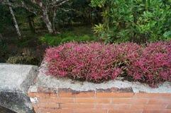 Jardins botaniques de Puerto Plata Images libres de droits