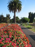 Jardins botaniques de Rotorua Images libres de droits