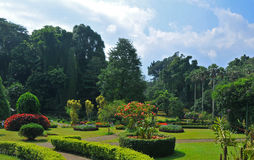 Jardins botaniques royaux de Kandy (Sri Lanka, Asie) Photographie stock