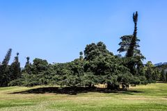 Jardins botaniques royaux du Sri Lanka Kandy photo stock