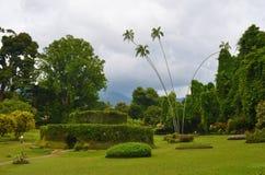 Jardins botaniques royaux, Sri Lanka Photographie stock libre de droits