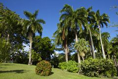 Jardins botaniques, Scarborough, Tobago Photos stock