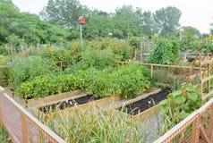 Jardins d'allotissement Photographie stock