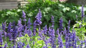 Jardins das flores Fotografia de Stock Royalty Free