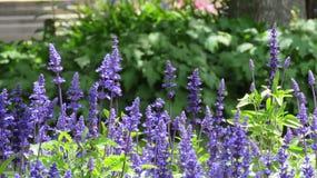Jardins das flores Foto de Stock Royalty Free