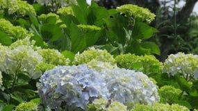 Jardins das flores Fotos de Stock Royalty Free