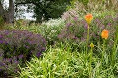 Jardins de Bressingham - a oeste de Diss em Norfolk, Inglaterra - unidos fotografia de stock royalty free