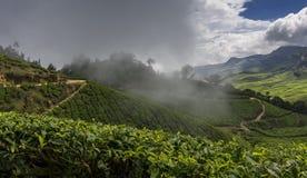 Jardins de chá em Munnar, Kerala, Índia Foto de Stock Royalty Free