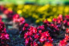 Jardins de Duncan dans le wshington de Spokane image libre de droits