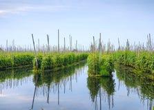 Jardins de flutuação no lago Inle Fotos de Stock