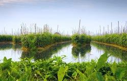 Jardins de flutuação no lago Inle Fotografia de Stock Royalty Free