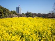 Jardins de Hamarikyu em Tokyo, Japão Imagem de Stock Royalty Free
