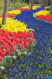 Jardins de Keukenhof Imagem de Stock