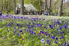 Jardins de Keukenhof photographie stock libre de droits