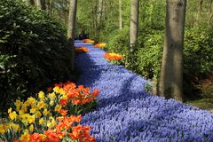 Jardins de Keukenhof Photo de macro de tulipes images stock