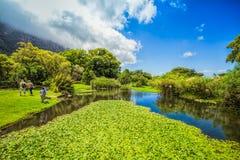 Jardins de Kirstenbosch Fotos de Stock Royalty Free