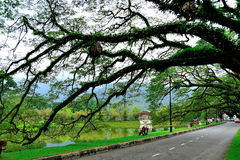 Jardins de lac Taiping Photo stock