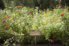 Jardins de Lauritzen, Omaha, Nébraska, jardin de pollinisateur image libre de droits
