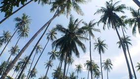 Jardins de noix de coco Photo libre de droits