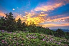 Jardins de rhododendron, Roan Mountain, Tennessee Photos libres de droits