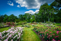Jardins de rosas em Elizabeth Park, em Hartford, Connecticut fotografia de stock