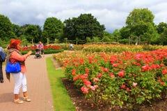 Jardins de rosas Londres Inglaterra do parque dos regentes Fotos de Stock
